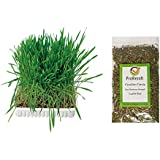 trixie cat grass instructions