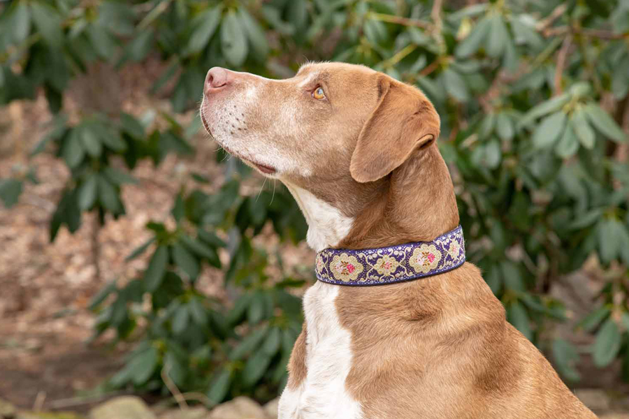 esky dog collar instructions