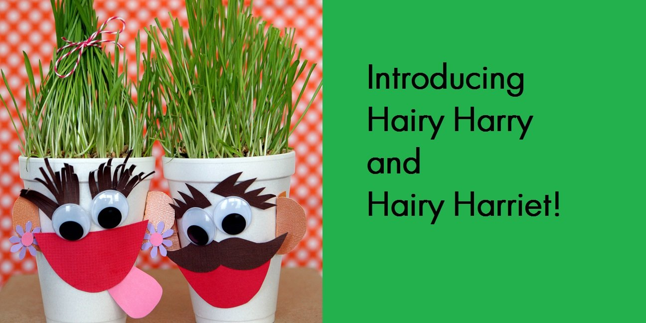 hairy harry grass heads instructions