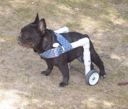 homemade dog wheelchair instructions