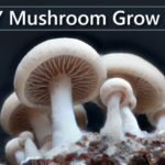 growing mushrooms in coffee grounds instructions