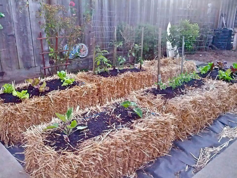 instructions how to start a small vegetable garden